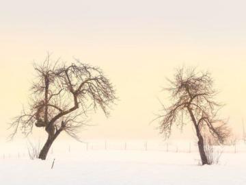 Zwei Bäume in einer Winterlandschaft