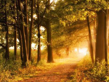 Waldlichtung in die helles Licht einfällt.